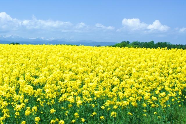 夢占い「花畑」に関する夢の診断結果