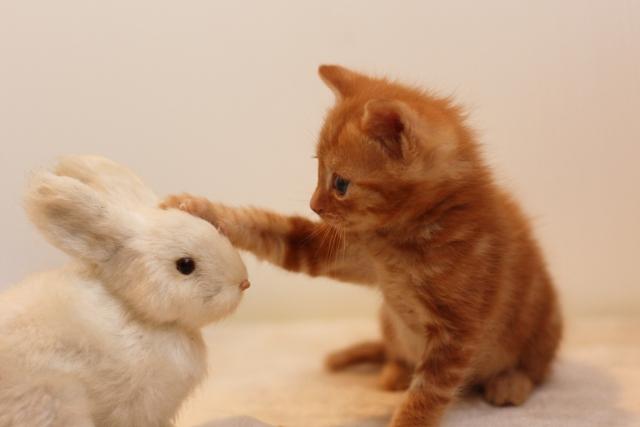 夢占い「動物の赤ちゃん」に関する夢の診断結果