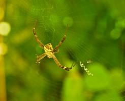 夢占い「黄色の蜘蛛」の夢の診断結果8選