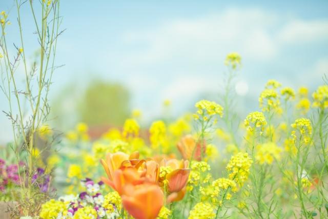 夢占い「満開の花」に関する夢の診断結果