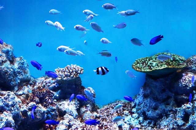 夢占い「水族館」に関する夢の診断結果10選