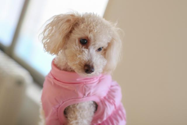 夢占い「白い子犬」に関する夢の診断結果