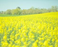 夢占い「黄色の花」に関する夢の診断結果