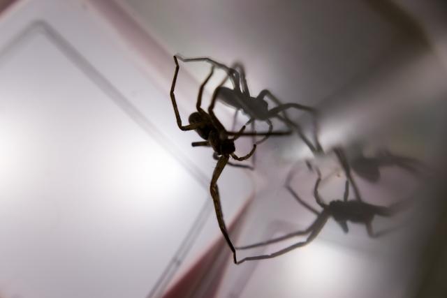 夢占い「黒い蜘蛛」の夢の診断結果9選