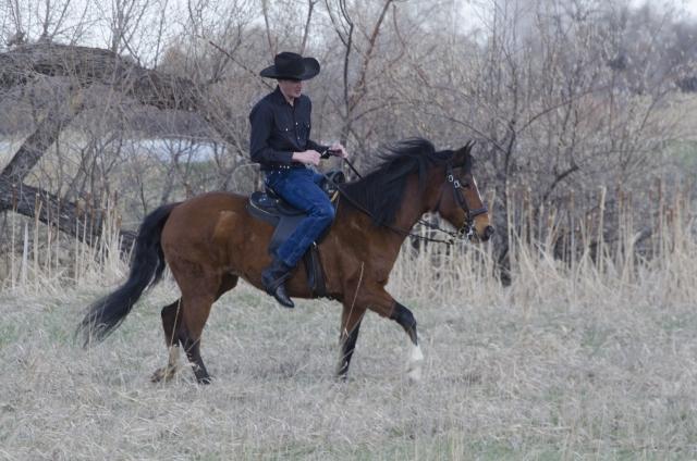 夢占い「馬に乗る」夢の診断結果