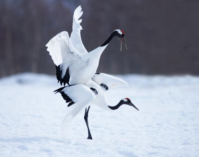 夢占い「鶴」に関する夢の診断結果