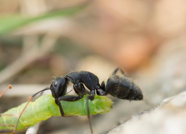 夢占い「蟻」に関する夢の診断結果14選
