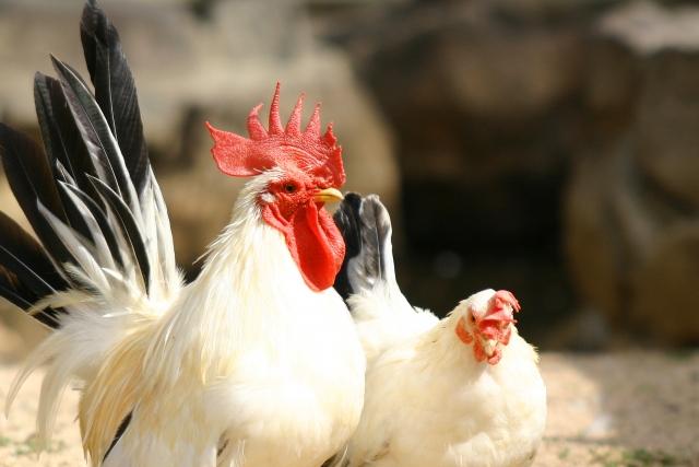 夢占い「鳥肉」に関する夢の診断結果