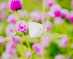 夢占い「白い蝶」に関する夢の診断結果
