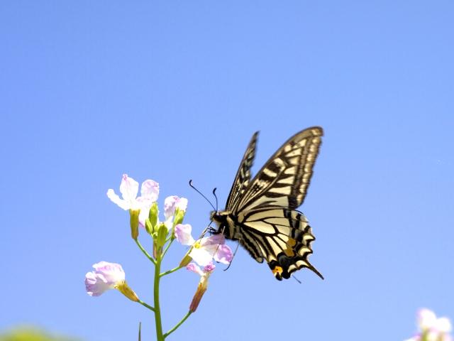 夢占い「アゲハ蝶」に関する夢の診断結果