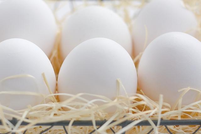 夢占い「卵」に関する夢の診断結果