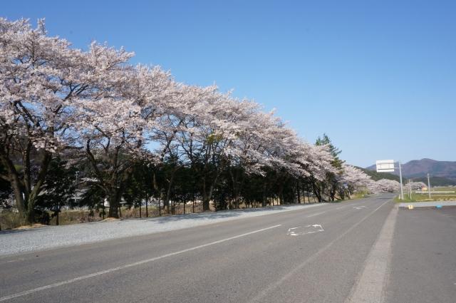 夢占い「桜並木」に関する夢の診断結果