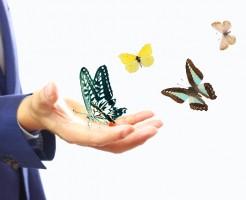 夢占い「蝶」に関する夢の診断結果