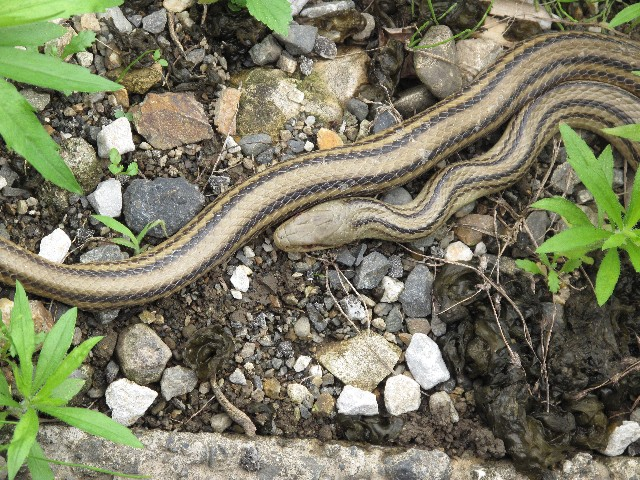 夢占い「蛇に追いかけられる」という夢の診断結果