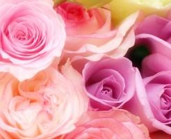 「花」に関する夢占いの診断結果一覧