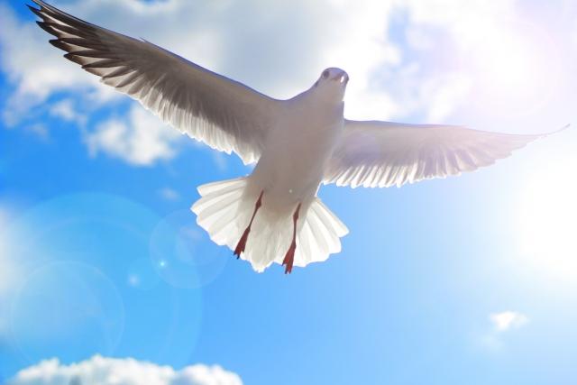 「鳥」に関する夢占いの診断結果一覧