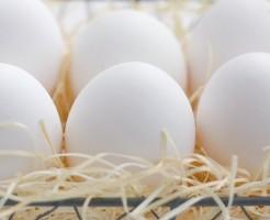 「卵」に関する夢占いの診断結果一覧