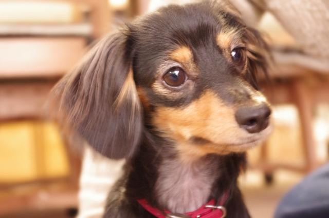 「犬」に関する夢占いの診断結果一覧