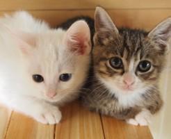 「猫」に関する夢占いの診断結果一覧