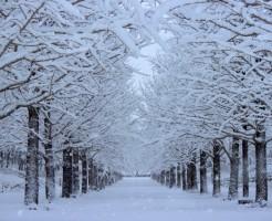 「雪」に関する夢占いの診断結果一覧