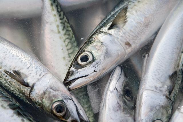 「魚」に関する夢占いの診断結果一覧