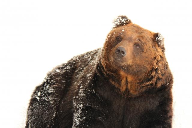 夢占い「熊に追いかけられる」夢の診断結果