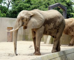 「象」に関する夢占いの診断結果