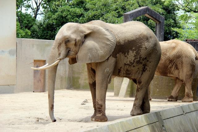 「象」に関する夢占いの診断結果●事例