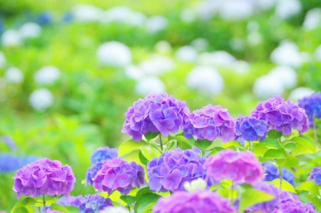 夢占い「紫」に関する夢の診断結果