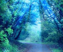 夢占い「妖精」に関する夢の診断結果