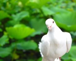 夢占い「鳩」に関する夢の診断結果