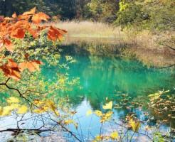 夢占い「沼」に関する夢の診断結果
