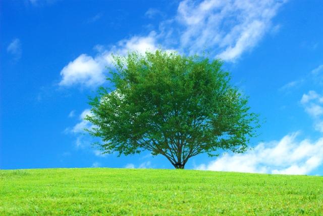 夢占い「木」に関する夢の診断結果