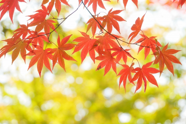 夢占い「紅葉」に関する夢の診断結果